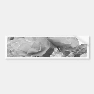 Rose of Love B/W Bumper Stickers
