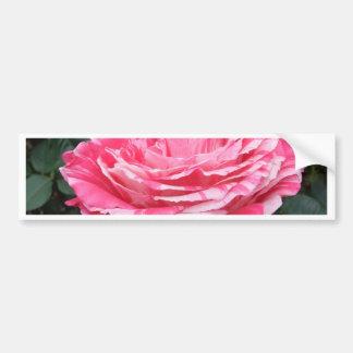 Rose of Love Car Bumper Sticker