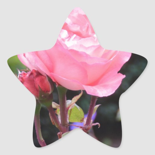 Rose of Love Sticker