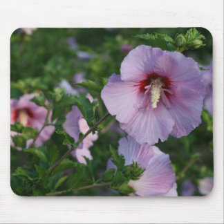 Rose of Sharon Blooms in Sunshine Mousepad