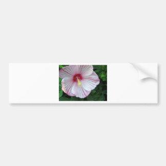 Rose of Sharon - Hibiscus Bumper Sticker