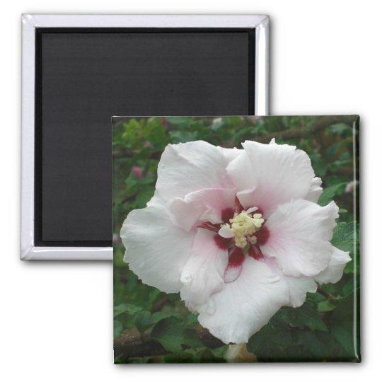 Rose of Sharon magnet