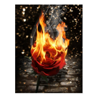 Rose On Fire, Burning Rose Postcard