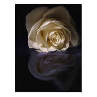 rose on reflection postcard