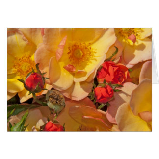 Rose pastel colors and rose buds greeting cards