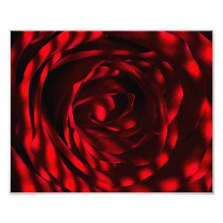Rose Petal Photograph