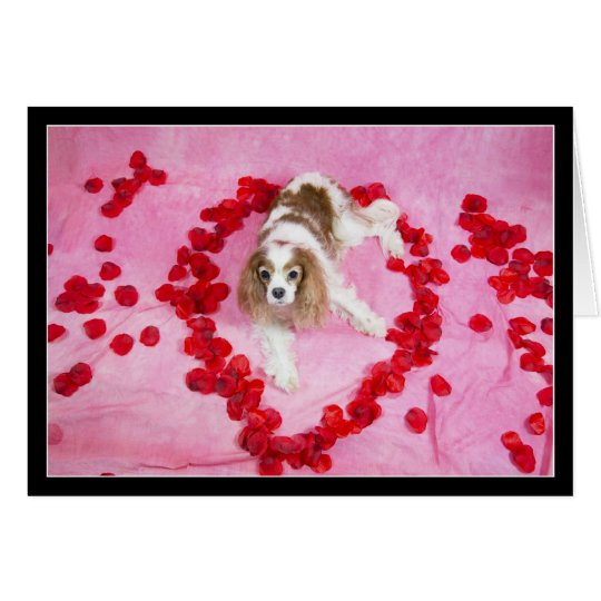 Rose Petals And Cavalier King Charles Spaniel Card