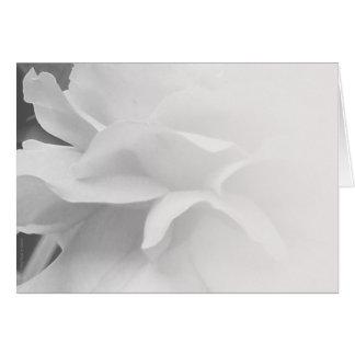 Rose Petals in Black & White Card