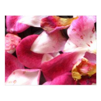 Rose petals postcards