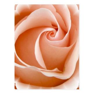 Rose Photo Postcard