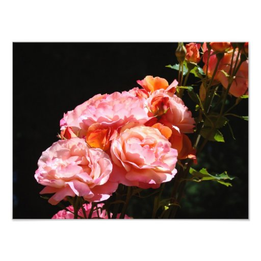 Rose Photography prints Pink Roses Bouquet Art Photo