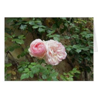 "Rose ""Pierre de Ronsard"" Card"