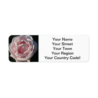 Rose Pink Sunlit Return Address Label