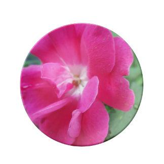 Rose Porcelain Plates