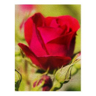 Rose Vykort