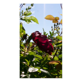 Rose Profile Card Pack Of Standard Business Cards
