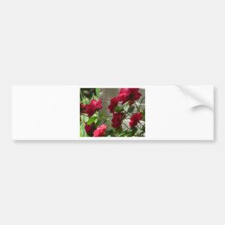 rose,red rose bumper sticker