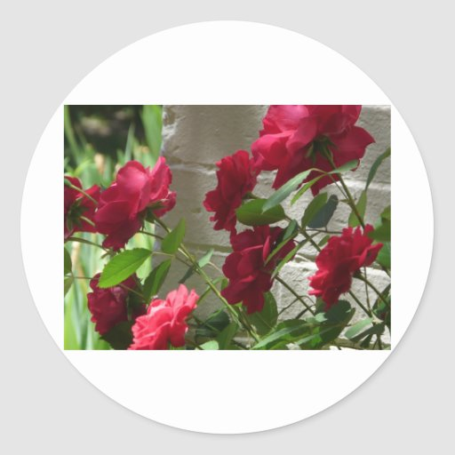 rose,red rose round stickers