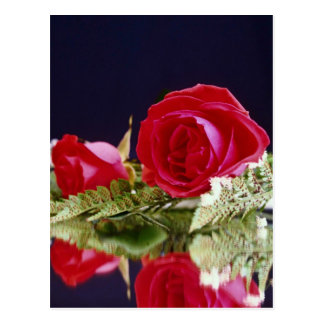 Rose reflections flowers postcards