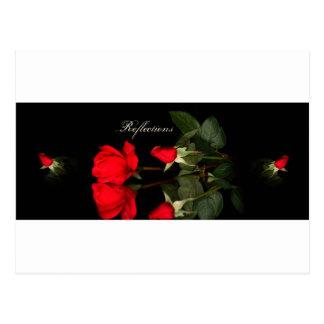 Rose, reflections postcard