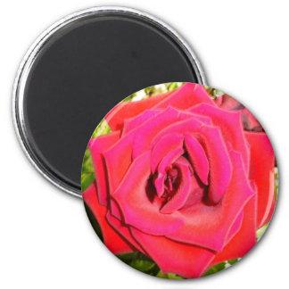 Rose Refrigerator Magnet