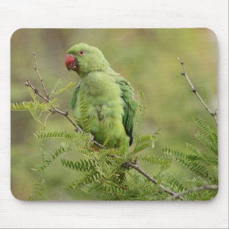 Rose-ringed Parakeet Mouse Pad