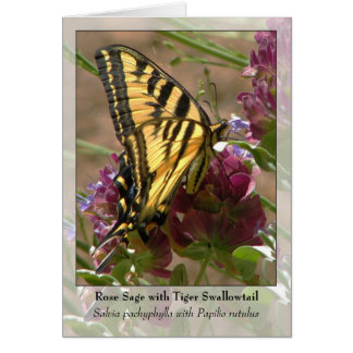 Rose Sage with Tiger Swallowtail - Native Notecard Note Card