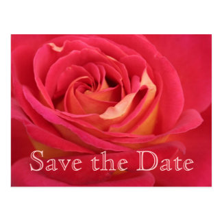 Rose Save the date 70th Birthday Celebration Postc Postcard