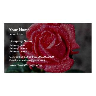 Rose, Shropshire Garden, after rain  flowers Business Card