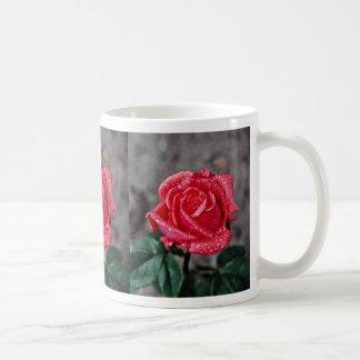 Rose, Shropshire Garden, after rain  flowers Mug