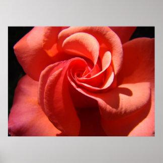 ROSE SPIRAL Art Prints Valentine Rose Framed Print