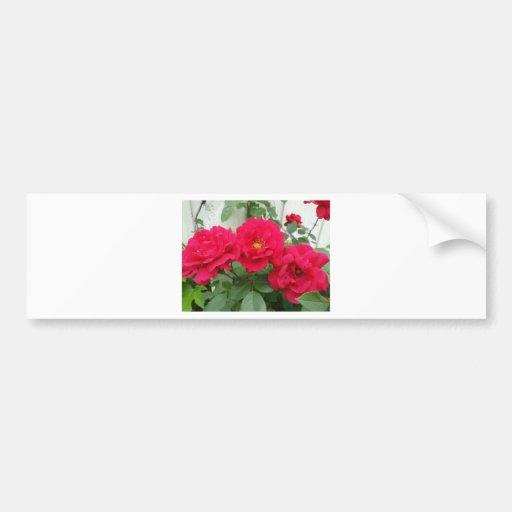 Rose Trio Bumper Sticker