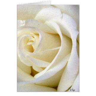 Rose White Greeting Card