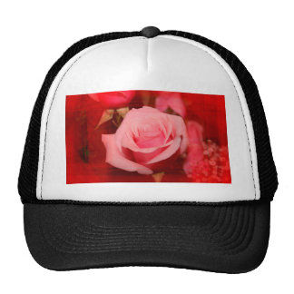 rose with red streaks pretty flower design hat