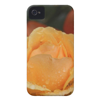 Rose with Water Droplets Case-Mate iPhone 4 Case