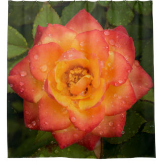 Rose with water drops shower curtain