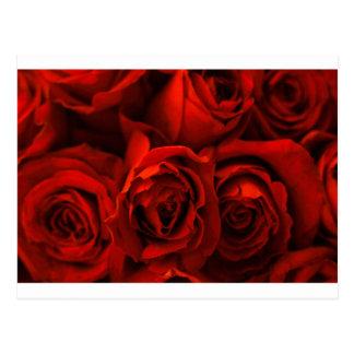 Rose - WOWCOCO Postcard