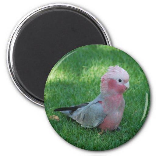 Roseate Cockatoo Magnet