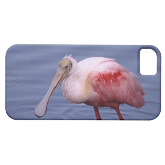Roseate Spoonbill (Ajaia ajaja) iPhone 5 Case