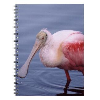 Roseate Spoonbill (Ajaia ajaja) Notebooks