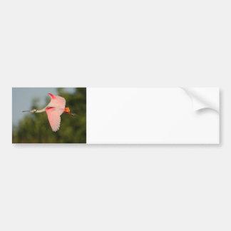 Roseate Spoonbill in Flight Bumper Sticker