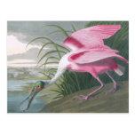 Roseate Spoonbill, John James Audubon