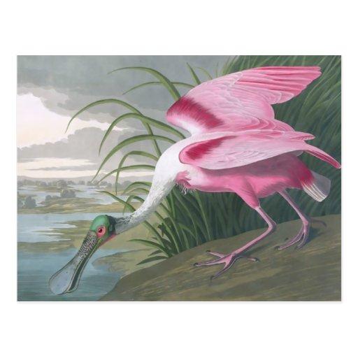 Roseate Spoonbill, John James Audubon Post Cards