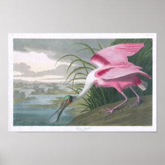 Roseate Spoonbill John James Audubon Print