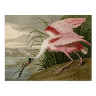 Roseate Spoonbill Post Card