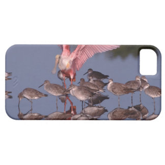 Roseate Spoonbill with Willets in shallow water iPhone 5 Cases