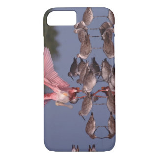 Roseate Spoonbill with Willets in shallow water iPhone 8/7 Case