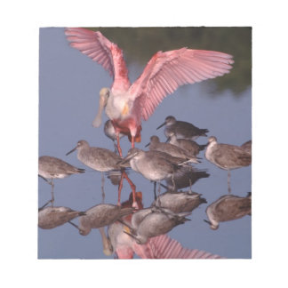 Roseate Spoonbill with Willets in shallow water Notepad