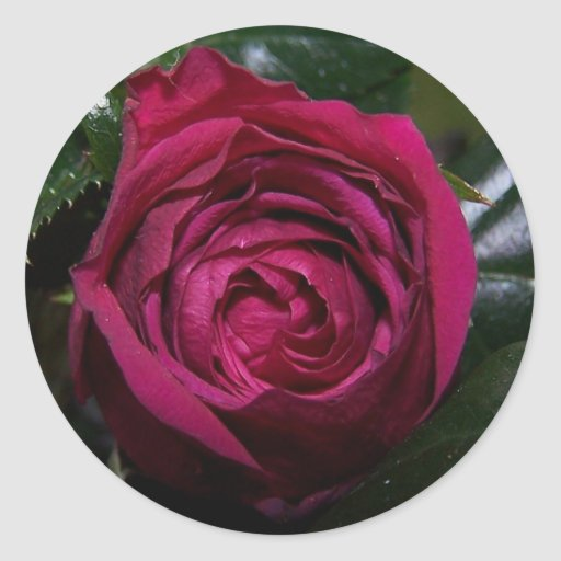 Rosebud Beauty Sticker