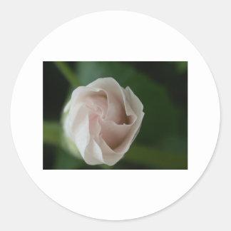 rosebud round sticker